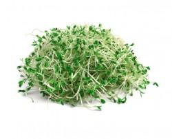 _Diğer - Brokoli Filizi - 10 kase