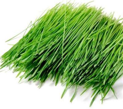 Kesilmiş Buğday Çimi - 10 Poşet