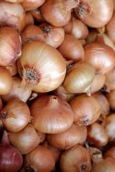 Taze Mutfak - Tokat Yassı Soğan 1 kg